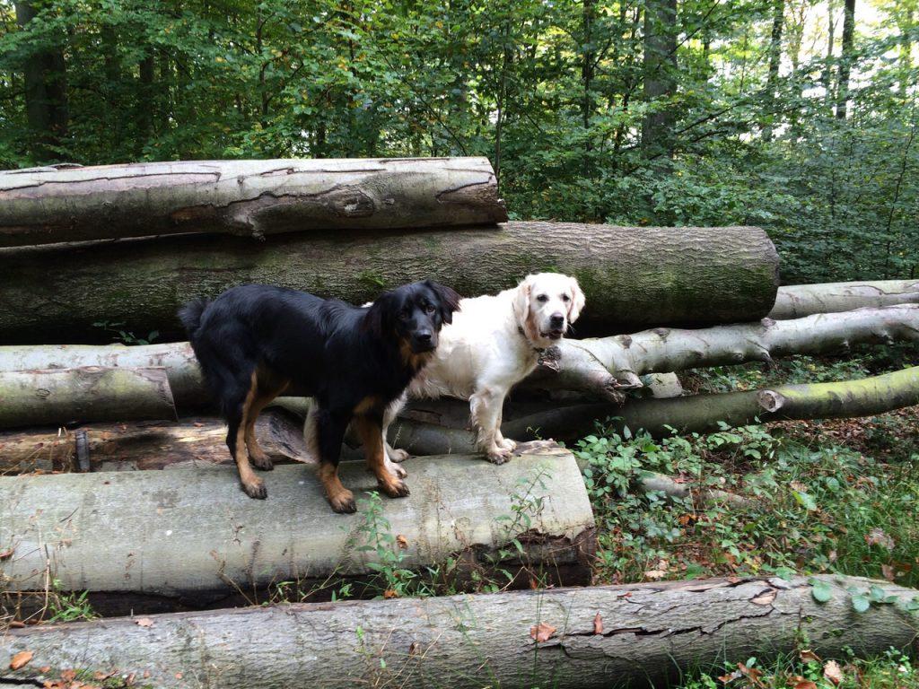Dunja Jenny im Wald